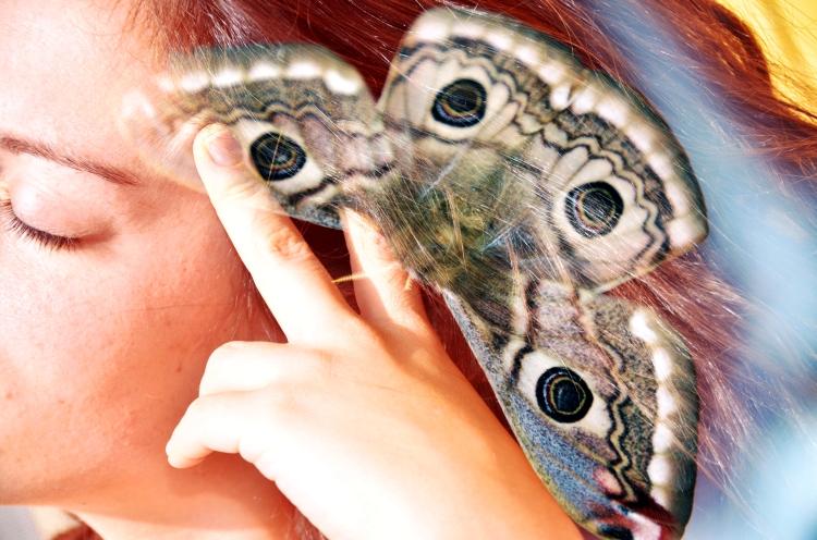 volo di farfalla.jpg